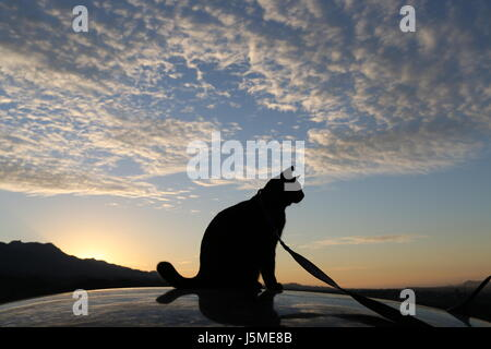Cat on the roof - Stock Photo