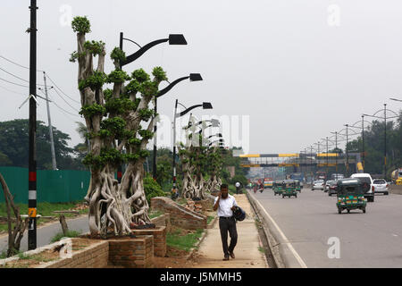 Dhaka 13 may 2017. A row of eye-catching bonsai Ficus (Bot) trees planted along a six kilometer stretch of the road - Stock Photo