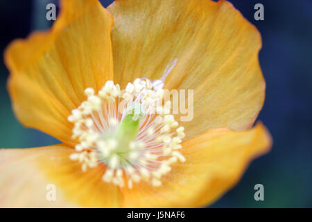 orange shine shines bright lucent light serene luminous macro close-up macro - Stock Photo