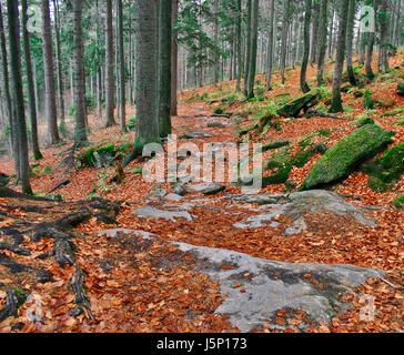 rocky road down - Stock Photo