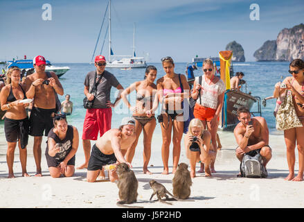 KO PHI PHI, THAILAND, February 1, 2014: Tourists feeding monkeys, top attraction of Phi Phi Islands, Monkey Bay - Stock Photo