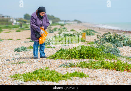 Elderly lady being community spirited by cleaning up the litter people have left behind on the beach. - Stock Photo