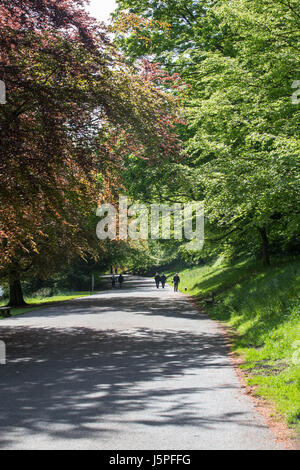 Leeds, UK. 18th May, 2017. People enjoying a morning work around Roundhay Park in Leeds on 18 May 2017.  A bright - Stock Photo