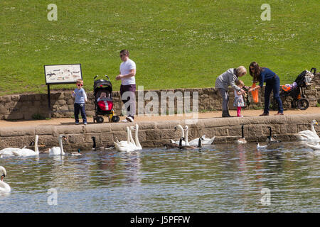 Leeds, UK. 18th May, 2017. Children feeding the ducks and swans at Roundhay Park in Leeds on 18 May 2017.  A bright - Stock Photo