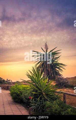 marbella  palm trees - Stock Photo