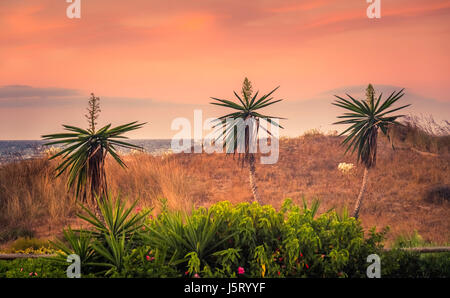 Marbella Spain nature reserve - Stock Photo