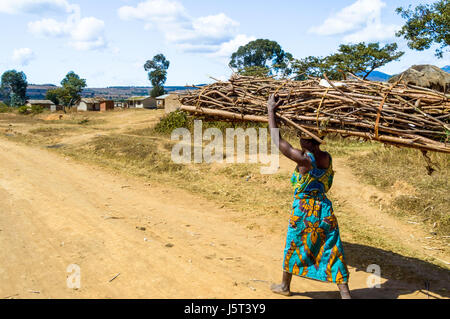 Woman carrying a heavy bundle of firewood on her head walking on a dirt road to a rural village in Malawi, Africa - Stock Photo