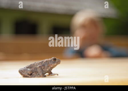Common toad (Bufo bufo) newly metamorphosed juvenile with a child in the blurred background. - Stock Photo