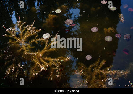 Lake, leaves and reflections - Stock Photo