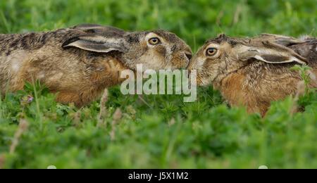 spring fever - Stock Photo