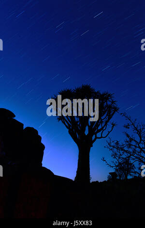 Night sky and silhouette of a Quivertree, Namibia - Stock Photo