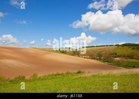a yorkshire wolds landscape with chalky cultivated fields and grazing meadows with hills and hedgerows under a blue - Stock Photo
