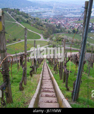 stairs vineyards vineyard steep gobbled rise climb climbing ascend uphill tread - Stock Photo
