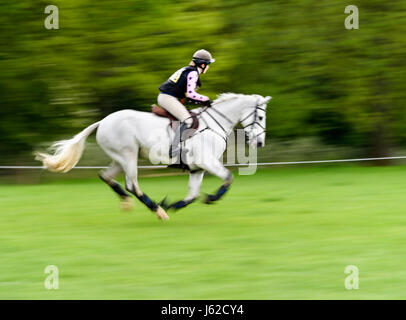 Rockingham Castle grounds, Corby, UK. 19th May, 2017. The horse 'Derrys Lady Lou' ridden by Lily Mawby gallops past - Stock Photo