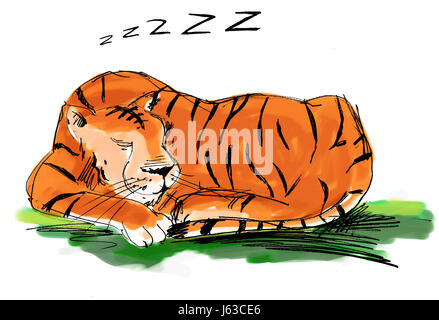 tiger lying down - Stock Photo