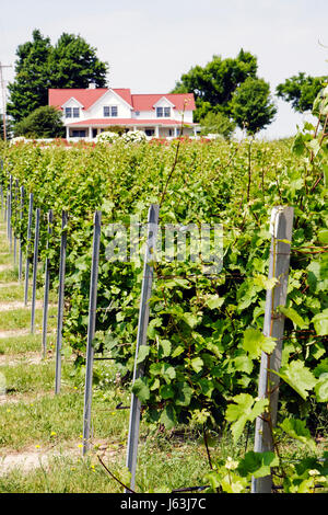 Michigan Traverse City Old Mission Peninsula Brys Estate vineyard winery grapes agriculture viticulture farm house - Stock Photo
