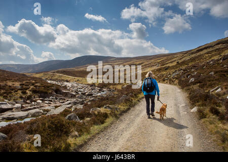 A dog walker on Jock's Road near the mountain of Creag Nan Gabhar near Braemar, Aberdeenshire, Scotland, UK - Stock Photo