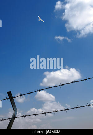 bird freedom liberty firmament sky fly flies flys flying fence blue space - Stock Photo