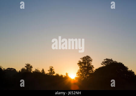 Early morning sun rising from behind a line of trees on the horizon. - Stock Photo