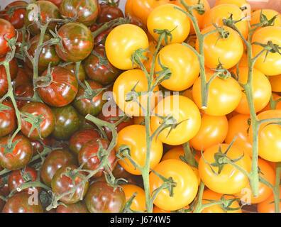 Golden Sunrise and Black Cherry Tomatoes (Solanum lycopersicum).