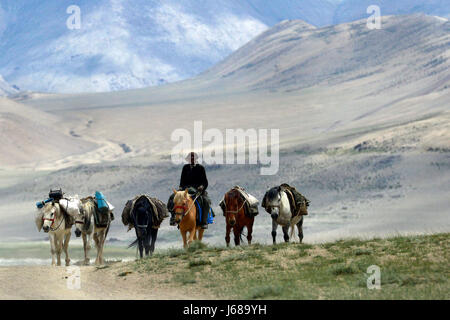 Pack horses and driver ride on the high mountains of the desert: off-road, horses go in a row, the person's face - Stock Photo