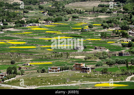 High mountains Tibetan village: terraced farming, green and yellow fields of rice and barley, small poor houses - Stock Photo