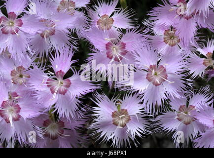 feather cloves - Stock Photo