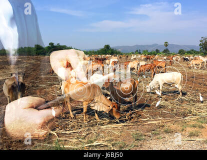 Animal tracking monitoring in smartfarm and internet of things concept. Double exposure of Hand holding smart phone - Stock Photo