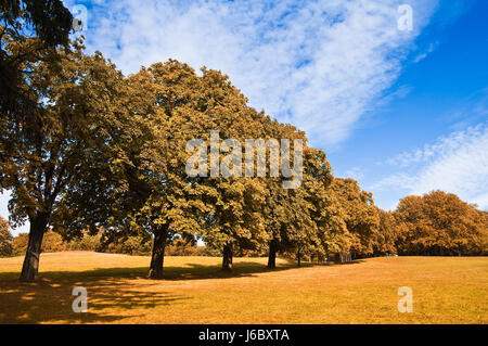 tree trees leaves bark maple foliage nature fall autumn shine shines bright - Stock Photo