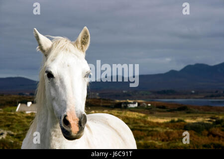 horse portrait pony farm animal wild horse scenery countryside nature head - Stock Photo