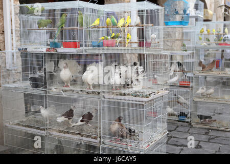 animal pet bird birds business dealings deal business transaction business - Stock Photo