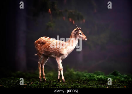 young fallow - Stock Photo