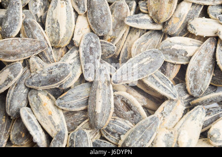 delicious roasted and salted sunflowers seeds in their shells. Close up sunflowers seed - Stock Photo