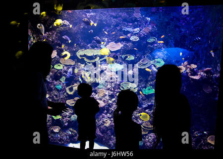 A family at SEA Aquarium Singapore. - Stock Photo
