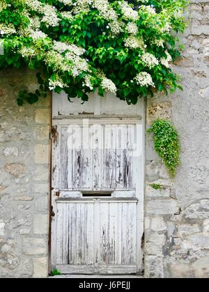 Old white wooden door with slot in the middle, set in stone wall with lush green foliage with white blossoms cascading - Stock Photo