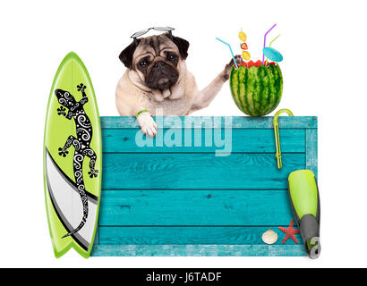 pug dog with blue vintage wooden beach sign, surfboard and summer watermelon cocktail, isolated on white background - Stock Photo