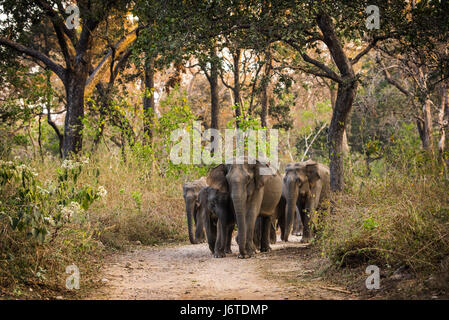 Elephant Herd - Stock Photo