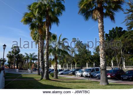 Palm trees at the botanical garden puerto de la cruz tenerife stock photo royalty free image - Botanical garden puerto de la cruz ...