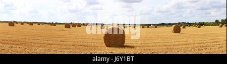 agriculture farming stack hay straws bundle haystack straw macro close-up macro - Stock Photo