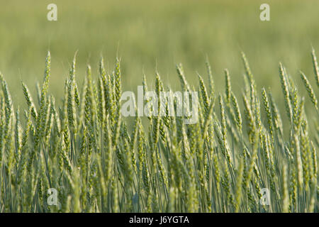 close food aliment agricultural agriculture farming shine shines bright lucent - Stock Photo
