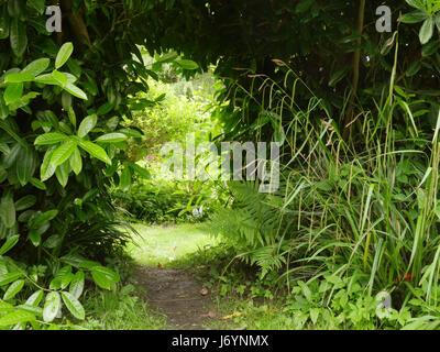Garden laurel bush and ferns - Stock Photo