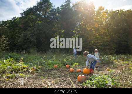 Grandfather picking pumpkins in a pumpkin patch with two grandchildren - Stock Photo