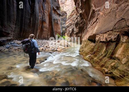 Hiker walking through river in the Narrows, Zion National Park, Utah, America, USA - Stock Photo