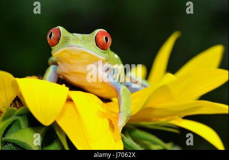 frog on sunflower - Stock Photo
