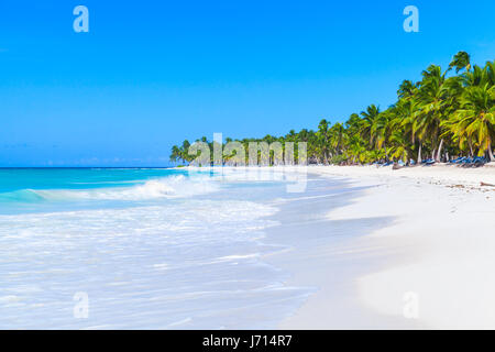 Coconut palms grow on white sandy beach. Caribbean Sea, Dominican republic, Saona island coast, popular touristic - Stock Photo