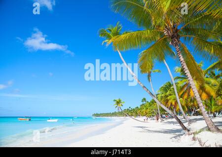 Landscape with coconut palms growing on sandy beach. Caribbean Sea, Dominican republic, Saona island coast, popular - Stock Photo