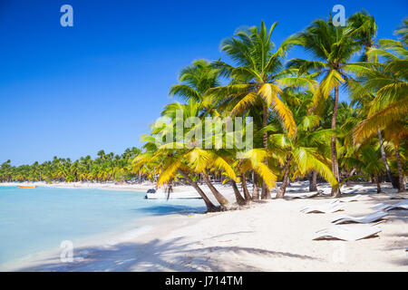 Palms trees growing on sandy beach. Caribbean Sea coast. Dominican republic landscape, Saona island, popular touristic - Stock Photo