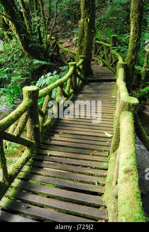 Wooden old bridge in forest across brook. Natural composition