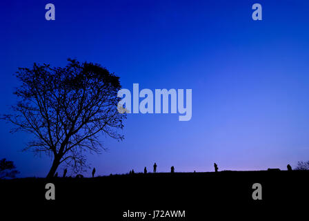 Silhouette of young photographer taking picture near tree of landscape during the sunset - Stock Photo