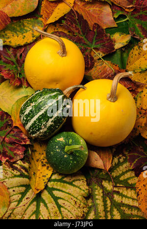 leaves cucurbits orange leaf tree trees garden plant green leaves flora grapes - Stock Photo